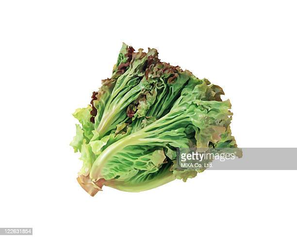Red leaf lettuce