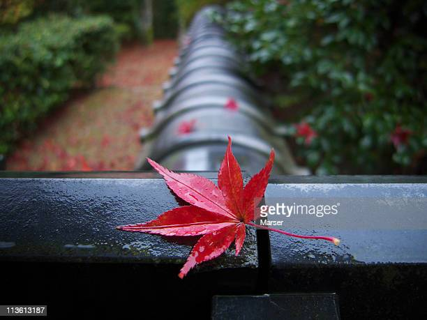 red leaf on wet japanese roof tile - uji kyoto stock pictures, royalty-free photos & images