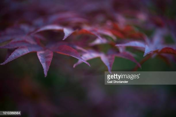 Red Leaves - edged