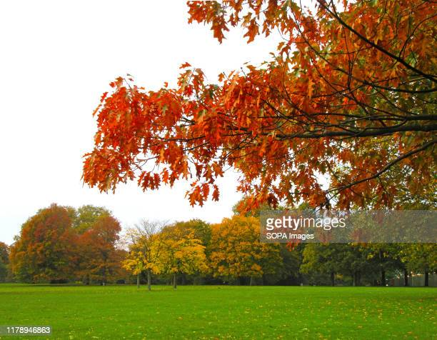 Red leaves lead to orange hues as Trees in London's Hyde Park give some real Autumn colours to the capital's most famous open space.