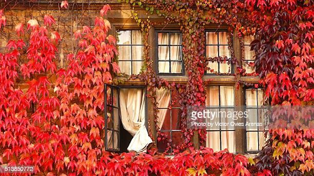 red leaves of auntumn - victor ovies fotografías e imágenes de stock