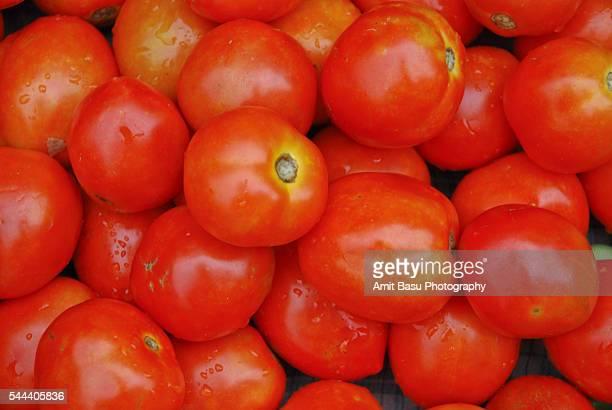Red luscious Tomatos