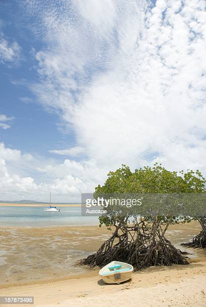 Red mangroves and boat at Round Hill Creek the site of Captain Cooks first landing in Queensland in May 1770 Stratocumulus and cirrus clouds form in...