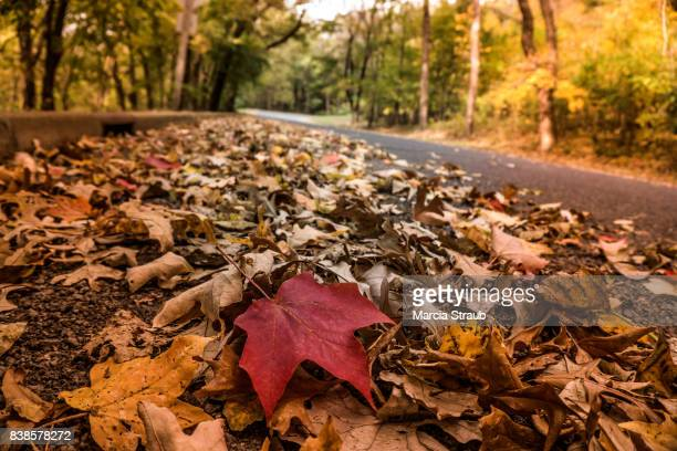 Red Maple Leaf on a Country Road