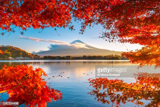 red maple leaves and mt fuji at sunset, japan - 紅葉 ストックフォトと画像
