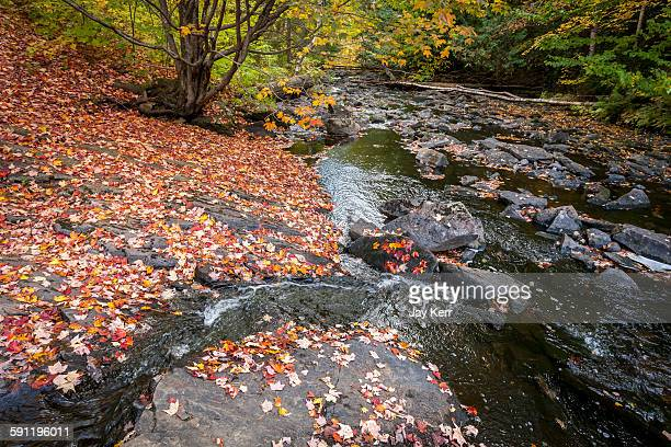 Red maple leaves on the riverbank