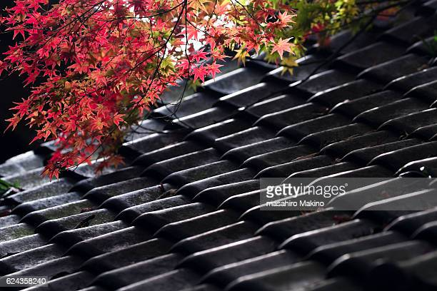 Red Maple Leaves over Roofing Tiles