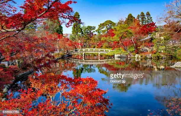 Red Maple Momiji Moment and Bridge at Hojo pond, Eikando Temple, Kyoto, Japan