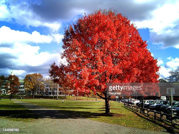 red maple - hanover new hampshire stock pictures, royalty-free photos & images