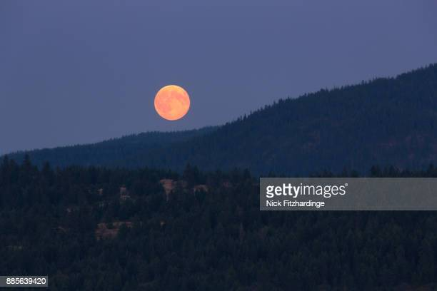 A red moon rising above the forested hills of Kalamalka Lake Provincial Park, British Columbia, Canada