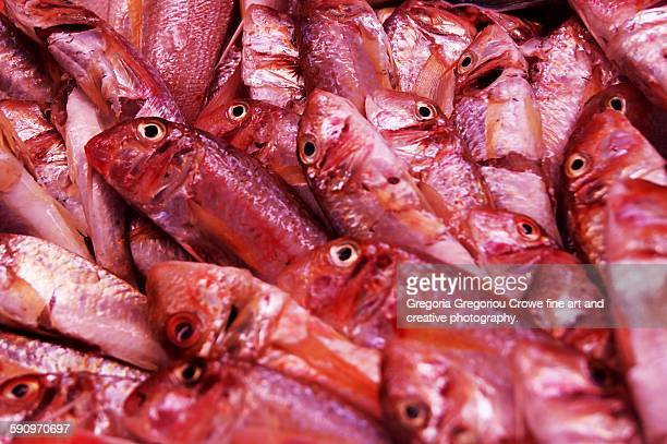 red mullet fish - gregoria gregoriou crowe fine art and creative photography - fotografias e filmes do acervo