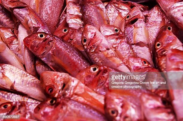red mullet fish - gregoria gregoriou crowe fine art and creative photography 個照片及圖片檔