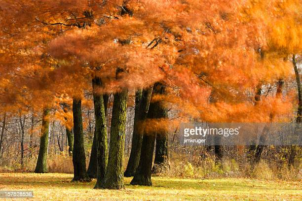 red oak impressionism in autumn landscape. - impressionism stock photos and pictures