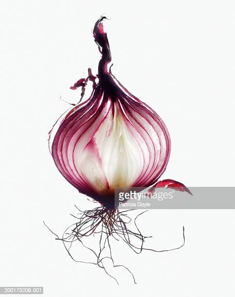 red onion, cross-section, close-up - spanish onion stock pictures, royalty-free photos & images