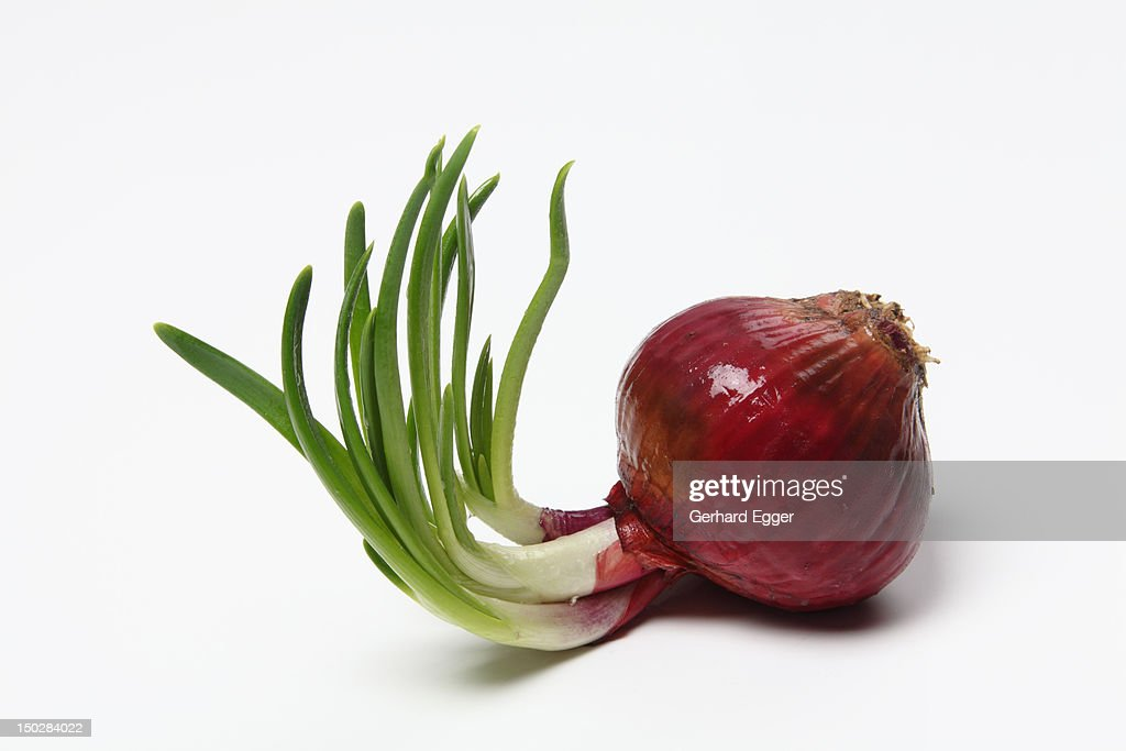 Red onion : Stock Photo