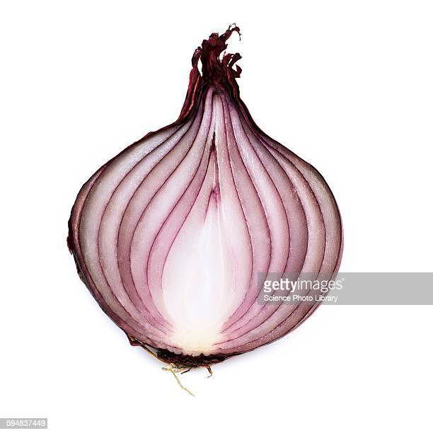 red onion - spanish onion stock pictures, royalty-free photos & images