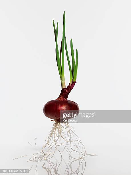 Red onion, studio shot