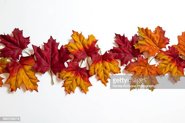 Red, Orange and Yellow Fall leaves isolated on a white background