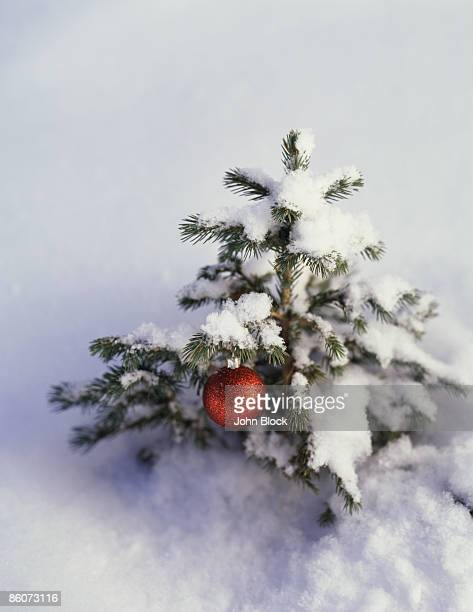 Red ornament on small snow-covered Christmas tree