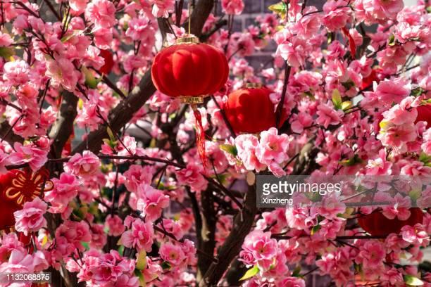 red packets containing monetary gifts on peach tree - prosperity stockfoto's en -beelden