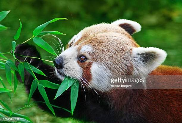 plant eating animals stock photos and pictures getty images