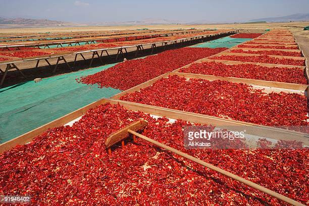 red peppercorns, sun-dried, southeast anatolia, turkey - ali kabas stock pictures, royalty-free photos & images