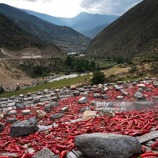red peppers laid out to dry - paro district stock pictures, royalty-free photos & images