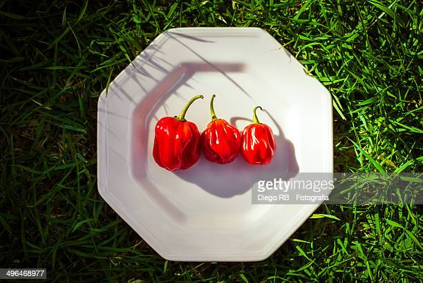Red peppers on a white plate over green grass