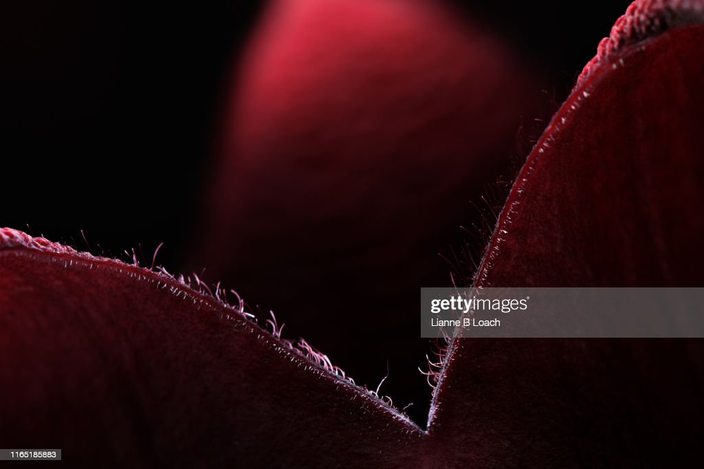 Red : Stock Photo
