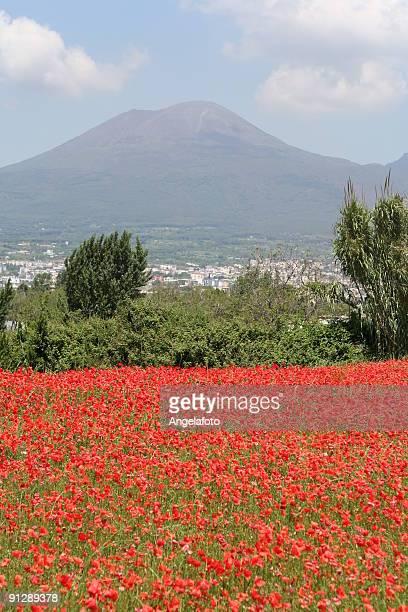 Red Poppies Field under Vesuvius during Spring Season