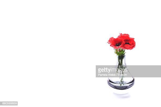 Red Poppies In Vase Against White Background
