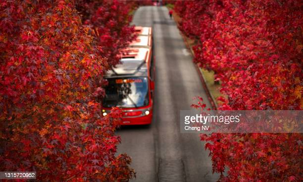 red public transport bus called ligueirinho in the street in the auntunn in curitiba. - curitiba stock pictures, royalty-free photos & images