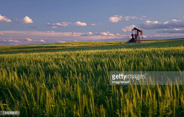 red pumpjack in wheat field on the rolling alberta plains - alberta stock pictures, royalty-free photos & images