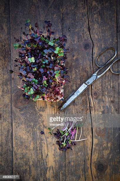 Red radish cress and scissors on wooden table, elevated view