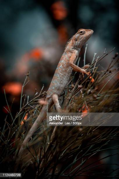 red reptile - sauropoda stock pictures, royalty-free photos & images