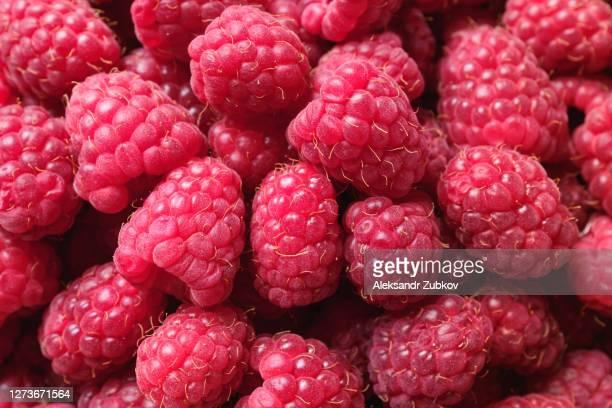red ripe raspberries, close-up. vegetarian, vegan, raw food. - 西シベリア ストックフォトと画像