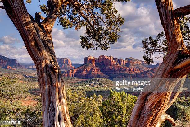 red rocks - sedona stock photos and pictures