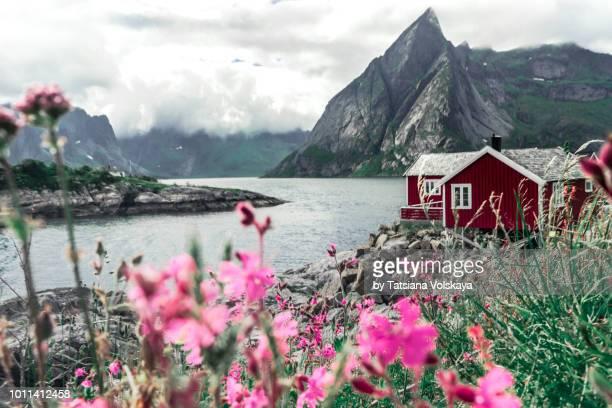 red rorbu houses in fisherman village hamnoy near reine, moskenes, lofoten islands, norway - lofoten stock pictures, royalty-free photos & images