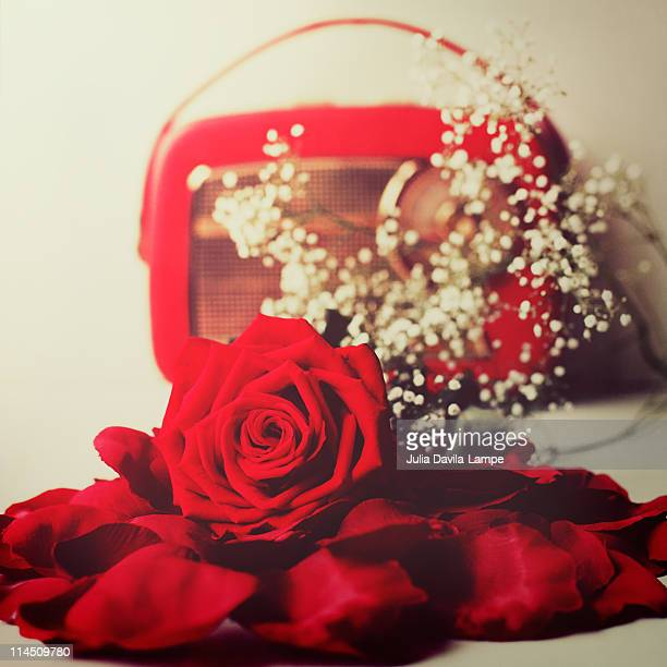 red rose and  vintage radio - julia rose stock photos and pictures