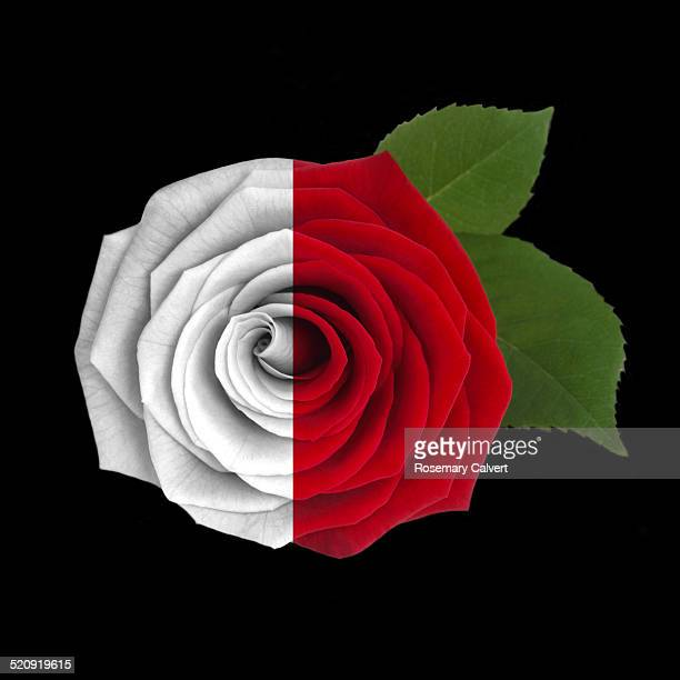 Red rose, half in colour, half black & white.