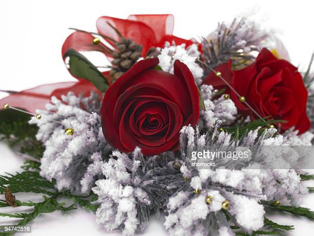 Red Rose in Winter Centered
