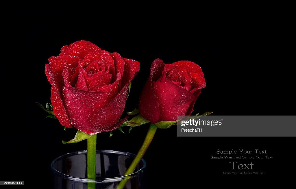 red rose isolated on black : Stock Photo