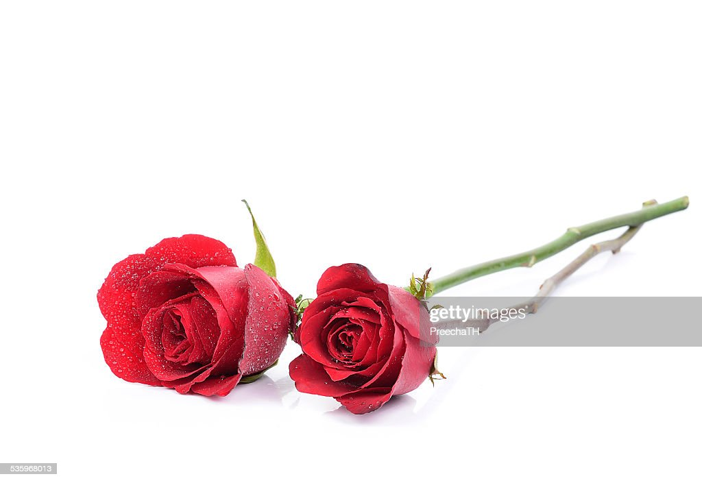 red rose isolated on white background : Stock Photo