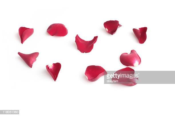 Rosa vermelho folhas