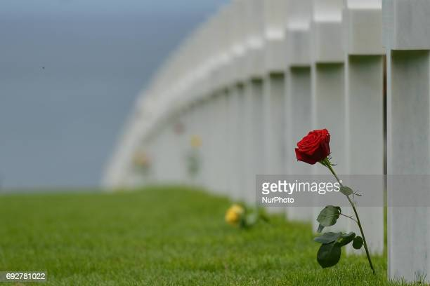 Red rose left by visitors at the graves of fallen soldiers at the Normandy American Cemetery that contains the remains of 9,387 American military...