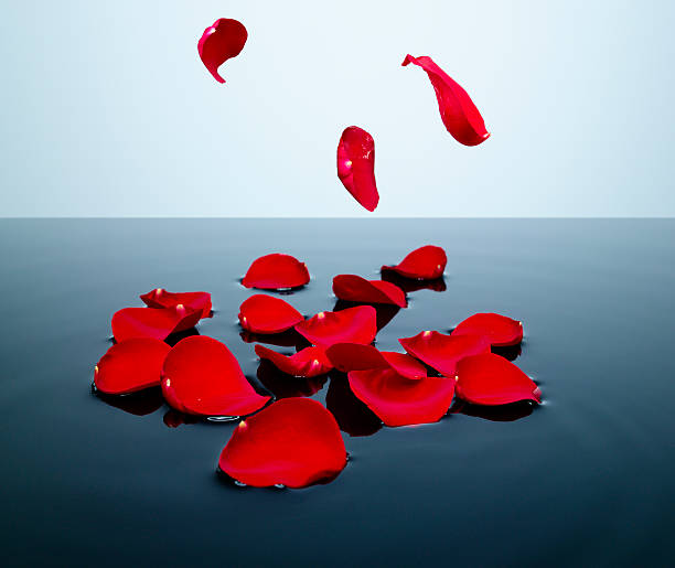Red Rose Petals Falling Into A Pool Of Water Wall Art