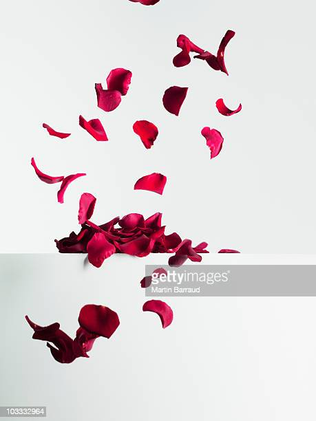 red rose petals falling - petal stock pictures, royalty-free photos & images