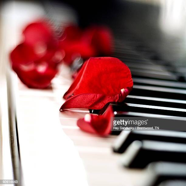 Red Rose Petals on Grand Piano Keyboard