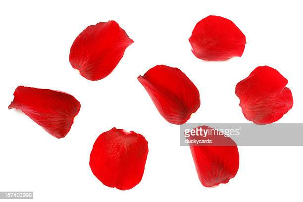 red rose petals - rose stock pictures, royalty-free photos & images