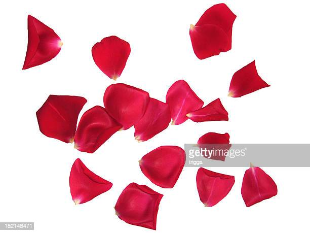 Red rose petals sprinkled on white background